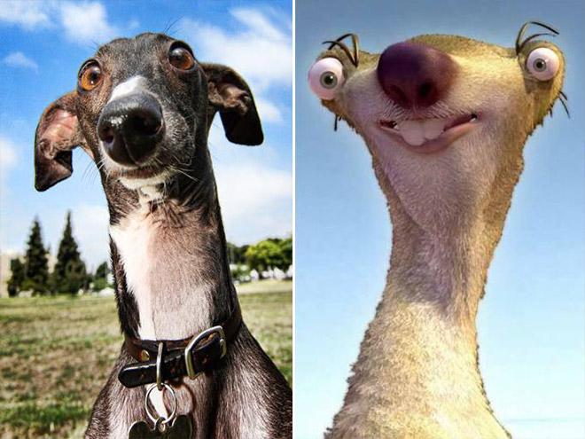 Greyhound Looks Like Sid From Ice Age