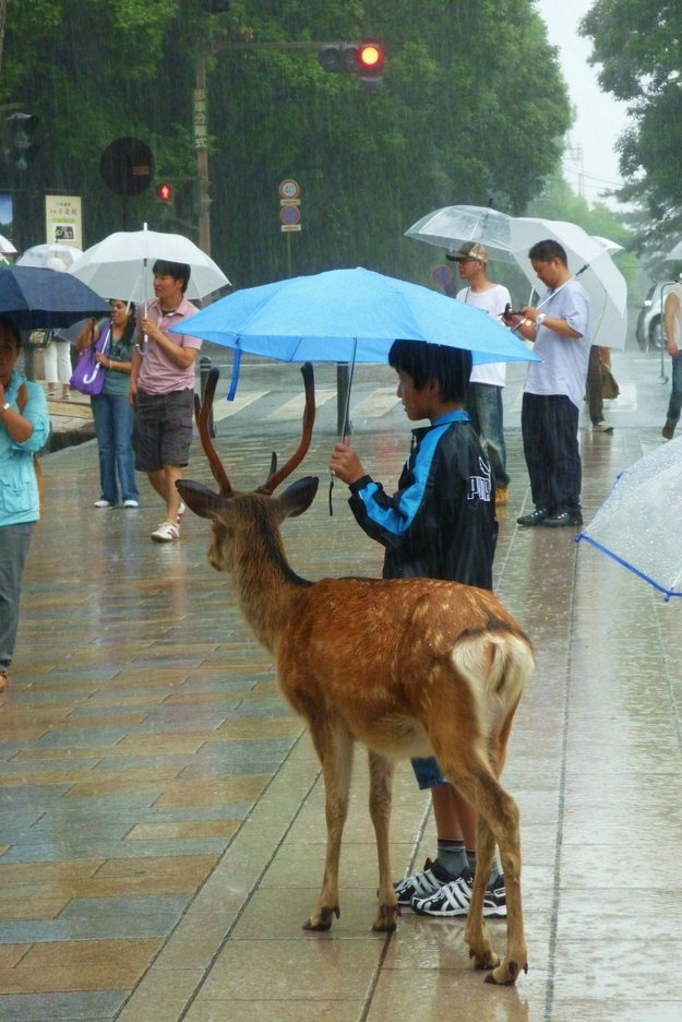 Kid sharing his umbrella with a deer
