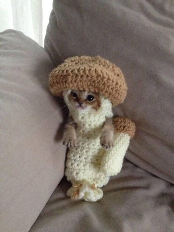 Mushroom Cat