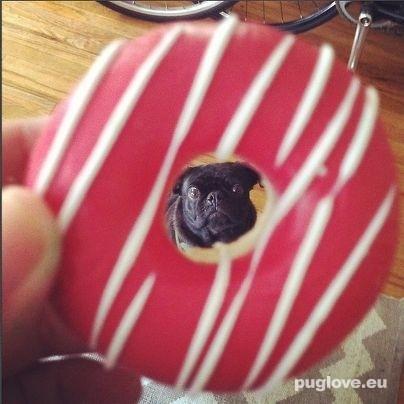 Pug vs Food (4)