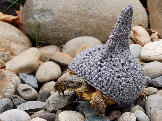 Shark Turtle