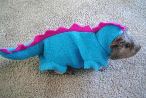 Stegosaurus Guinea Pig
