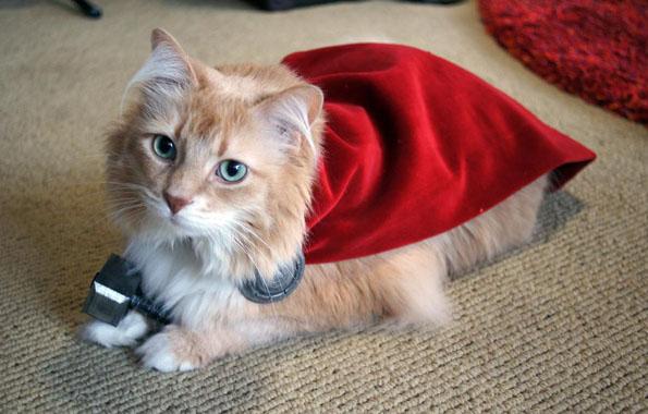 Thor the Cat