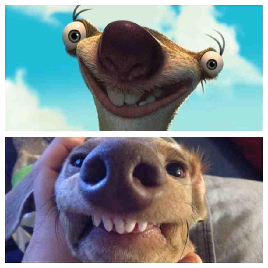 Weenie Dog Looks Like Sid From Ice Age