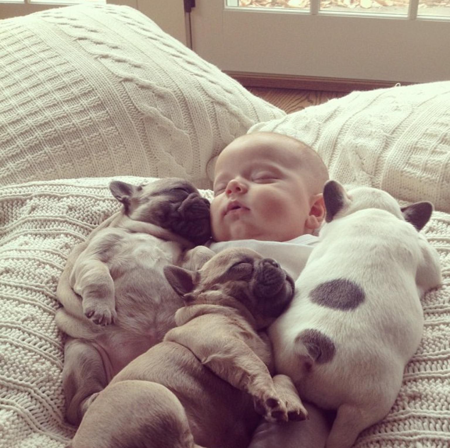 Baby Sleeping with French Bulldog (10)