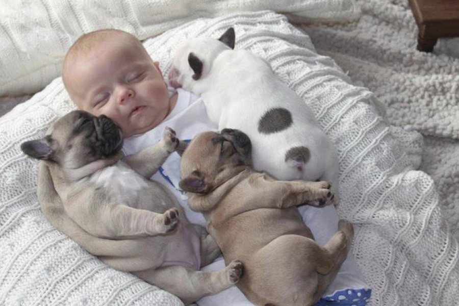 Baby Sleeping with French Bulldog (2)