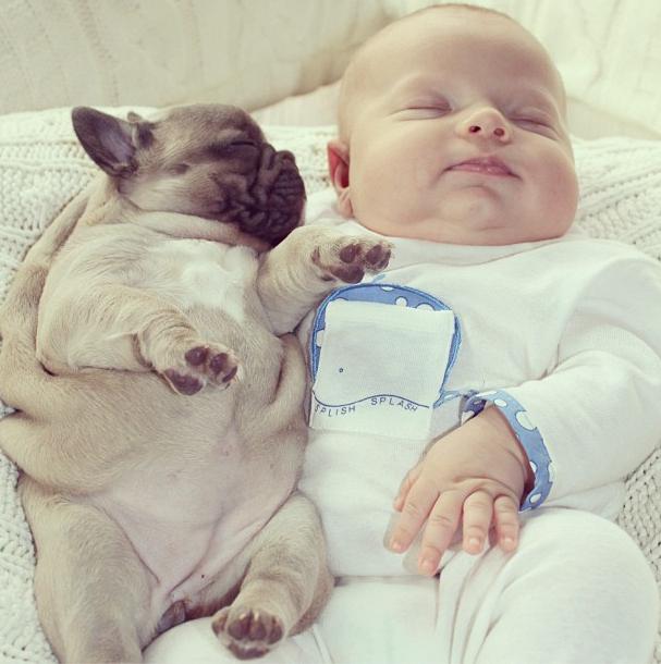 Baby Sleeping with French Bulldog (8)