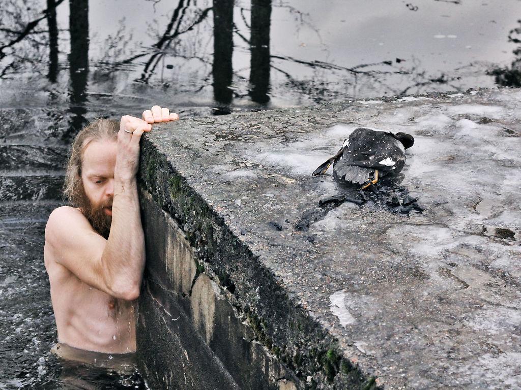 Norwegian Man Saves Duck 3