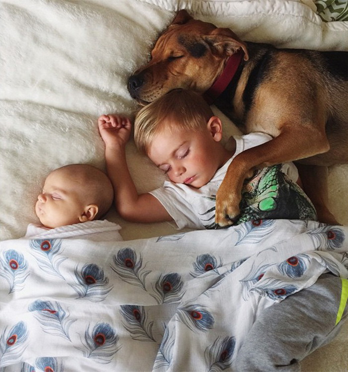 Theo, Beau And Evangeline Nap 9