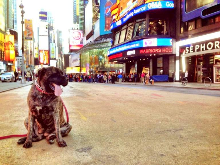 Dog At Times Square
