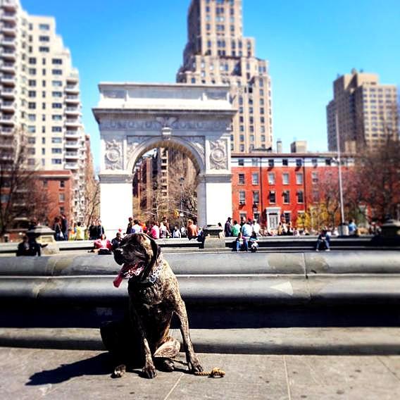 Dog At Washington Square Park