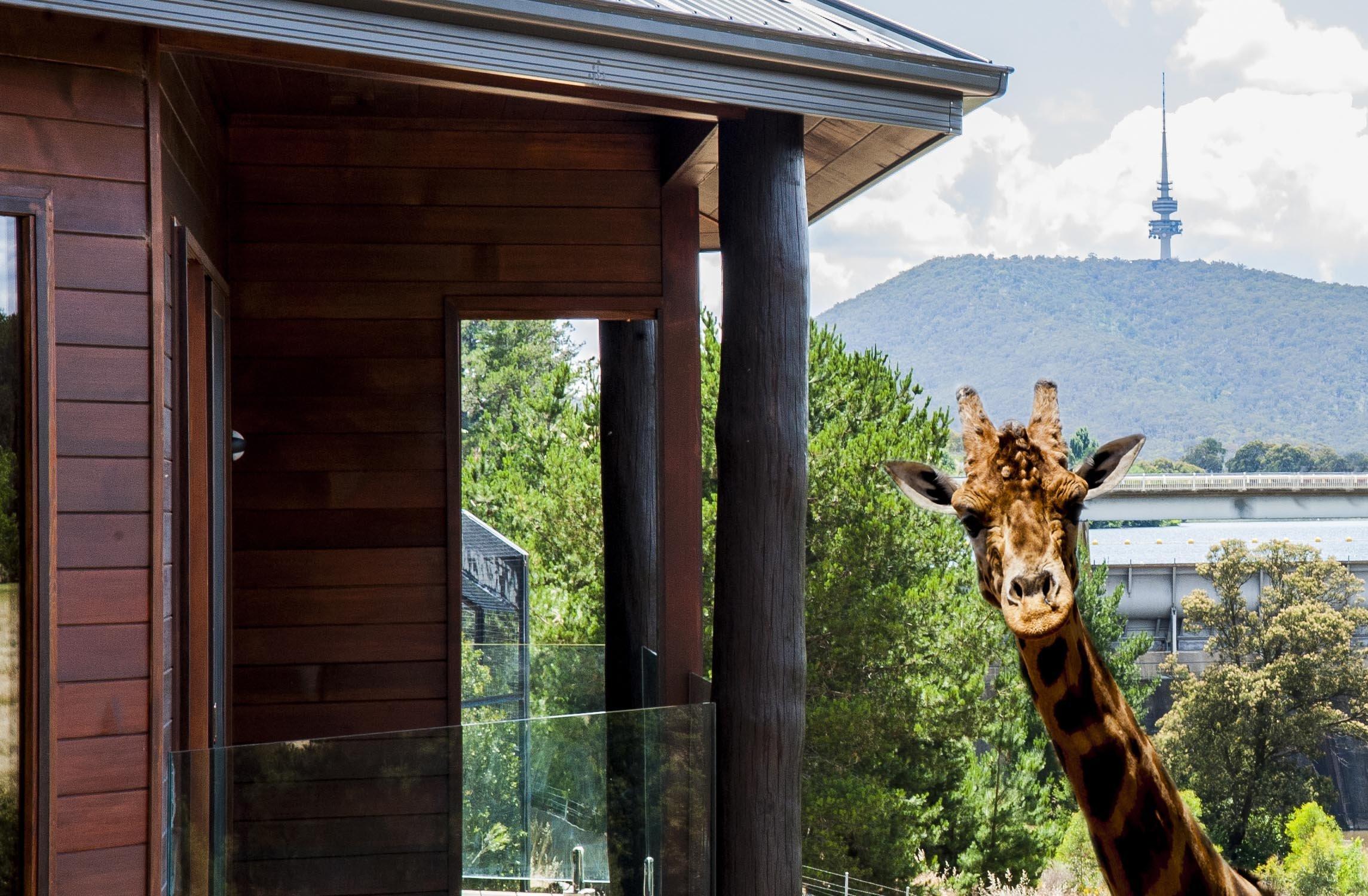 Jamala Wildlife Lodge Giraffe Treehouse