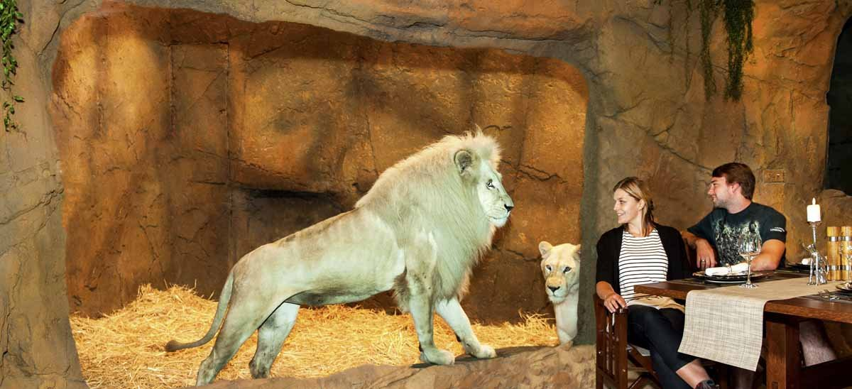 Jamala Wildlife Lodge Lions