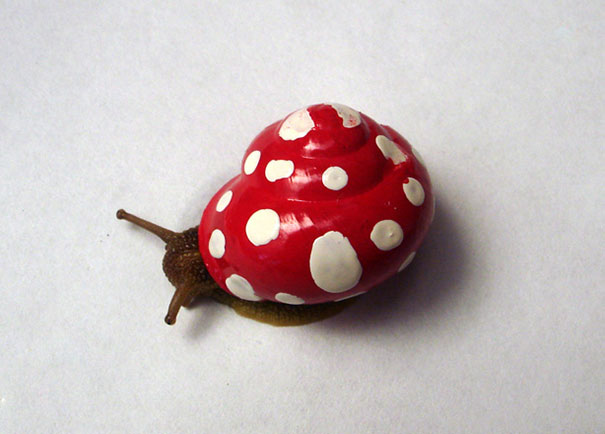 Painted Snail Shell 17