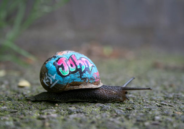 Painted Snail Shell 3