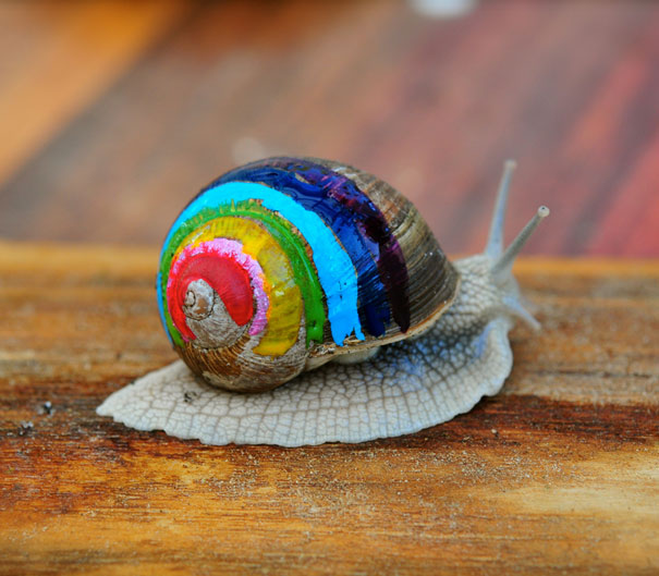 Painted Snail Shell 6