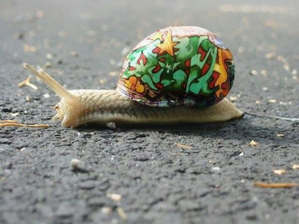 Painted Snail Shell 8