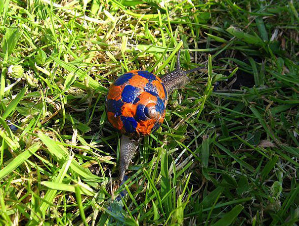 Painted Snail Shell 9