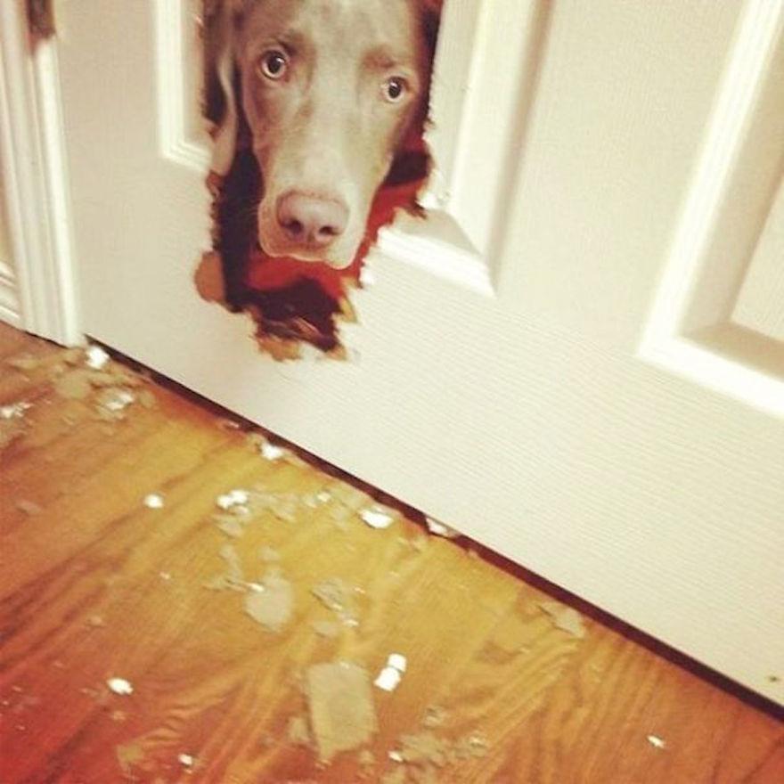 Bad Dog 24