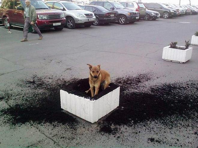 Bad Dog 5
