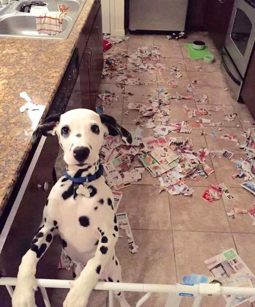 Bad Dog 8