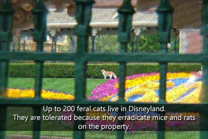 Disneyland Fact 9
