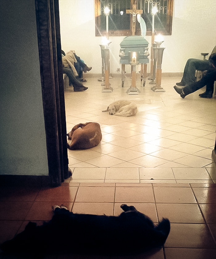 Stray Dogs At Funeral 1