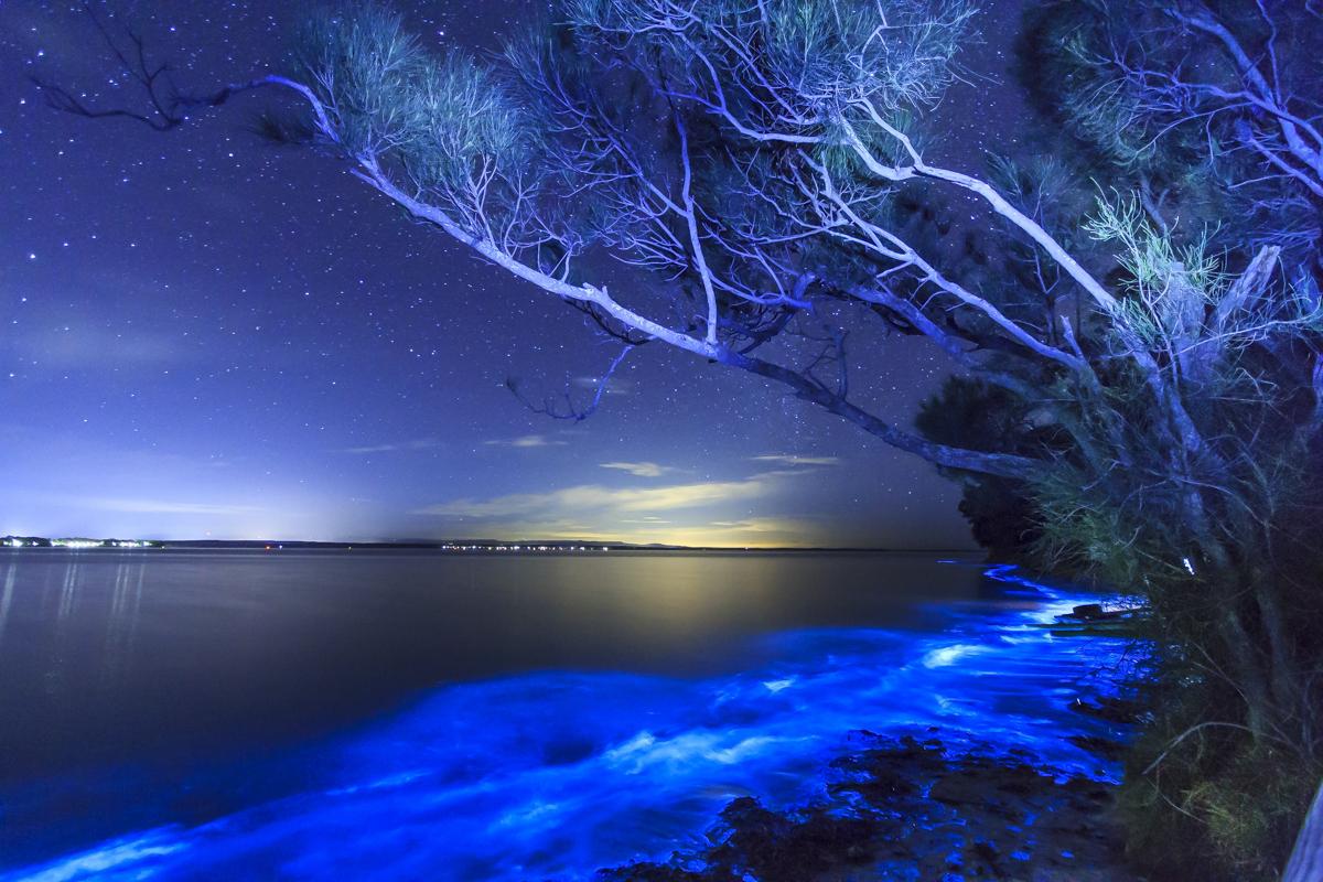Bioluminescent Plankton 3