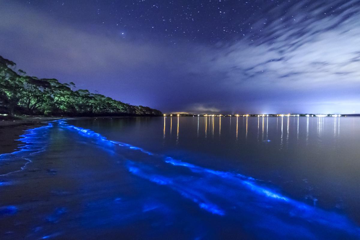 Bioluminescent Plankton 5