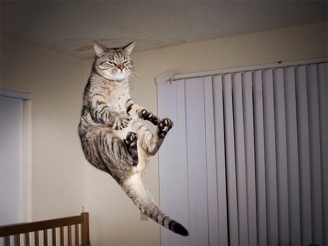 Flying Cat 1