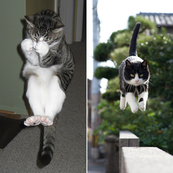 Flying Cat 11