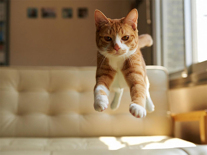 Flying Cat 12