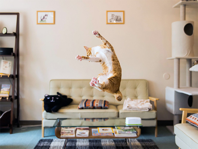 Flying Cat 13