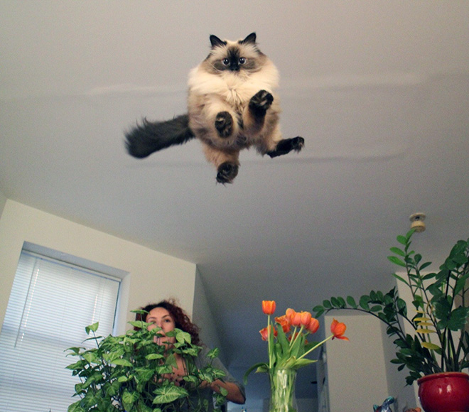 Flying Cat 16