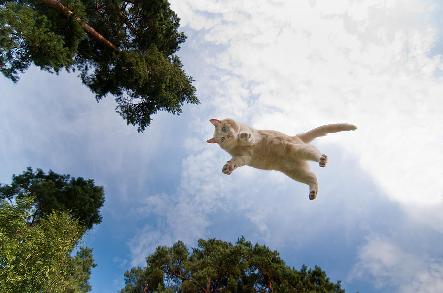 Flying Cat 20
