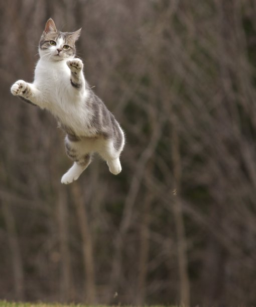 Flying Cat 23