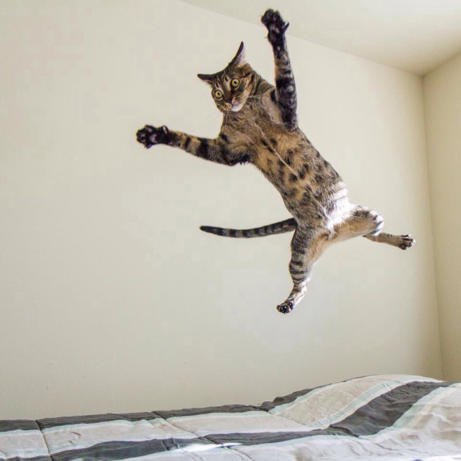 Flying Cat 3