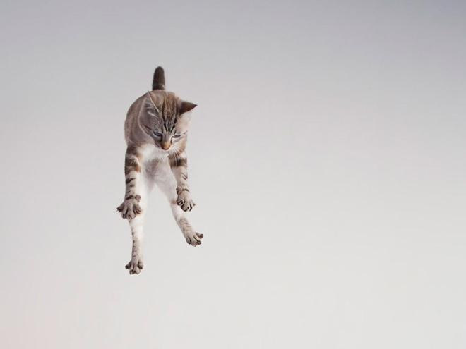 Flying Cat 5