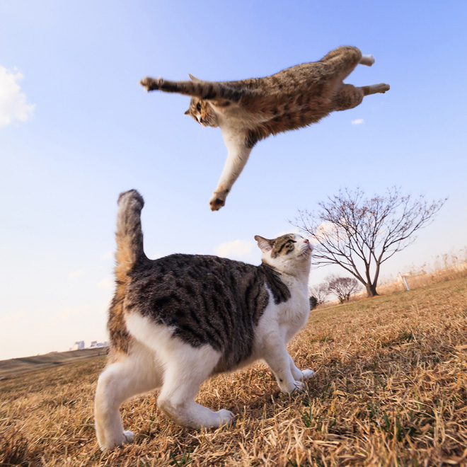Flying Cat 6