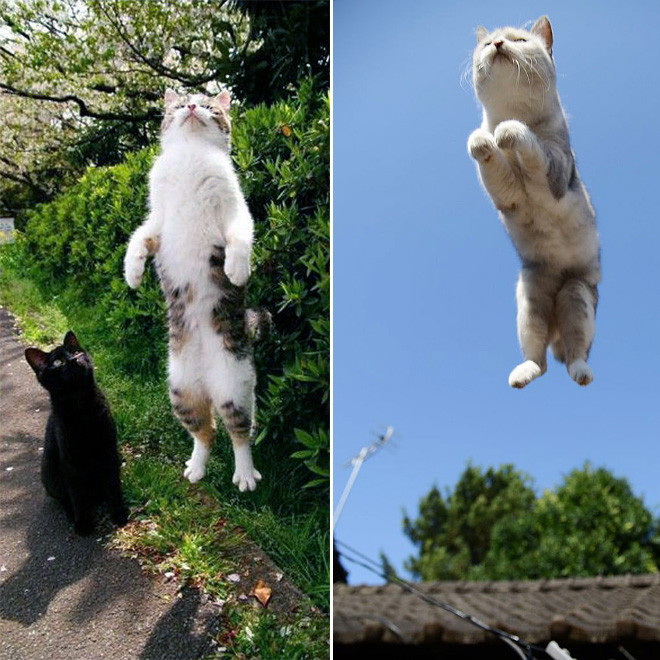Flying Cat 7