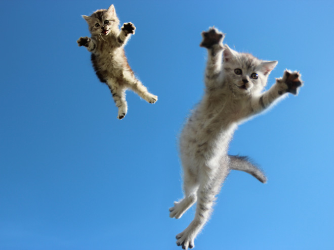 Flying Cat 8