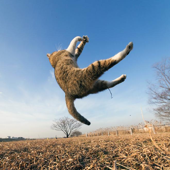 Flying Cat 9
