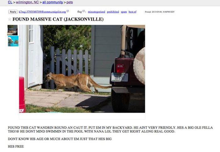 Free Massive Cat