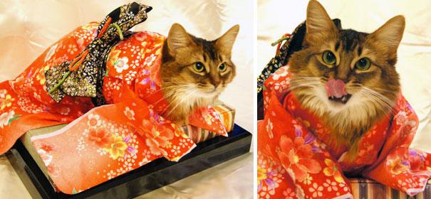 Cat In Kimono 1