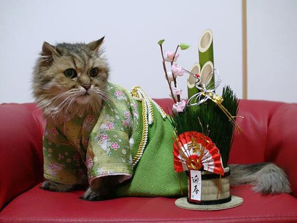 Cat In Kimono 10