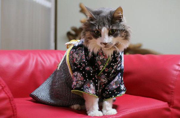 Cat In Kimono 11