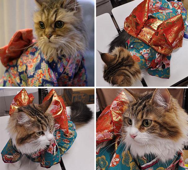 Cat In Kimono 12