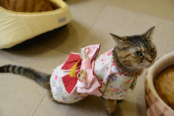 Cat In Kimono 13