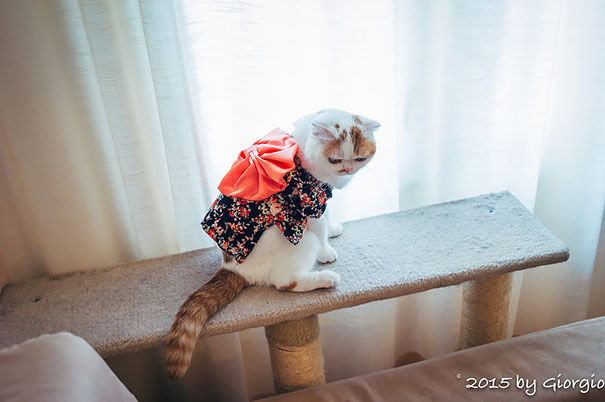 Cat In Kimono 14