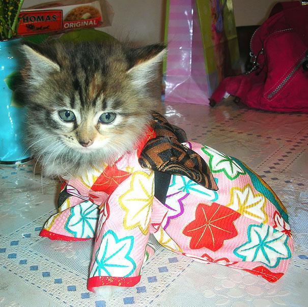 Cat In Kimono 15